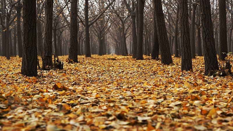 Brown trees surrounded with brown leaves