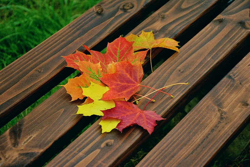 Several maple leaves on brown wooden surface