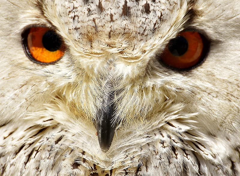 Portrait photography of white and black owl