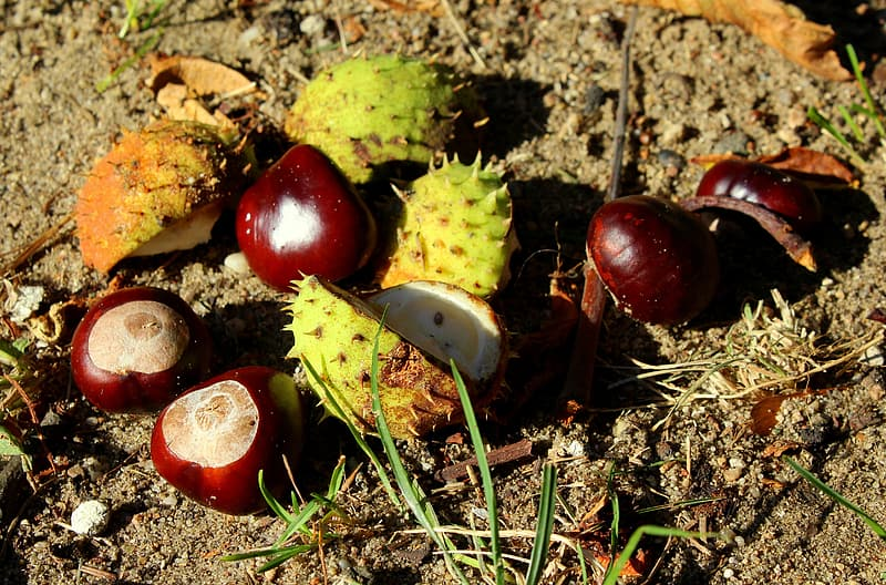 Red and green fruit on brown dried leaves