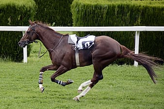 Panning photography of black horse with saddle