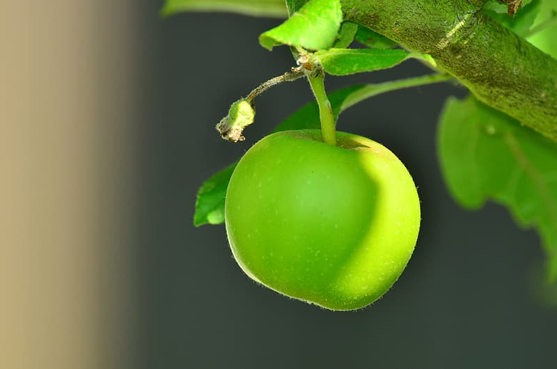 Tilt shift focus photography of green apple