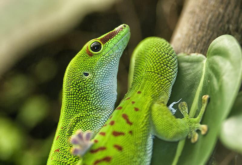 Green lizard on brown tree branch