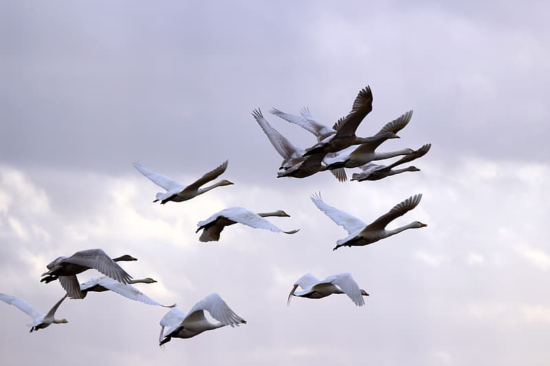 Flock of birds flying during day time