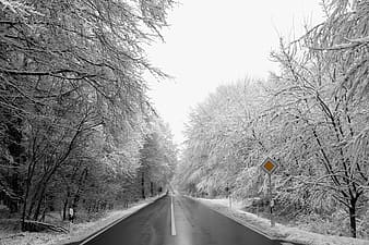 Paved road surrounded by bare trees