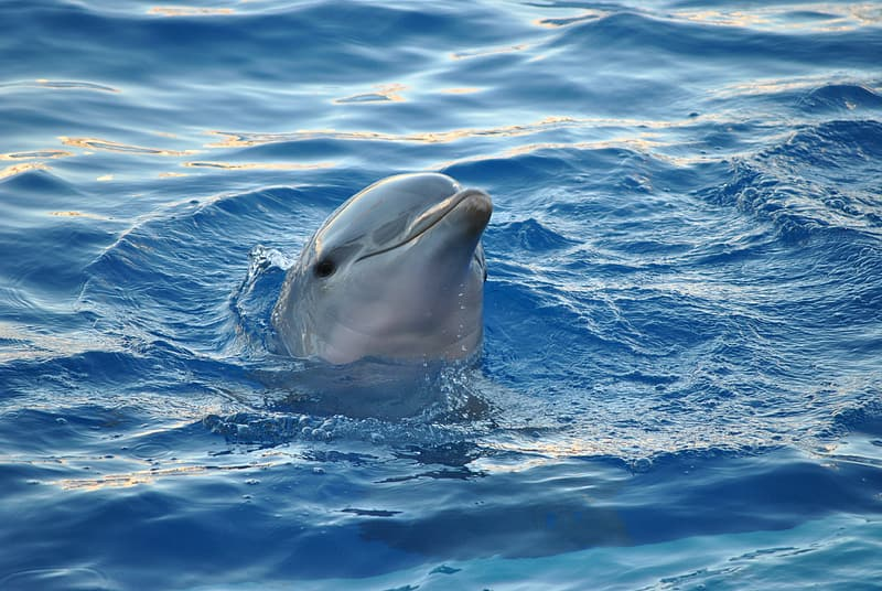 Gray dolphin on body of water