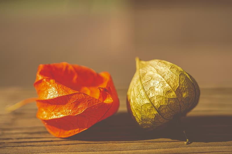 Orange and green leaves on brown wooden table