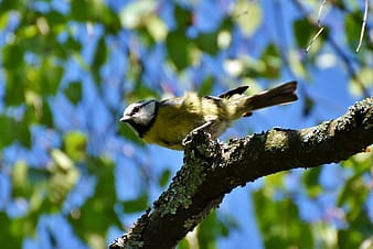 Low angle photography of yellow bird perching on branch