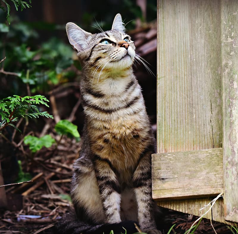 Brown tabby cat on brown wooden fence