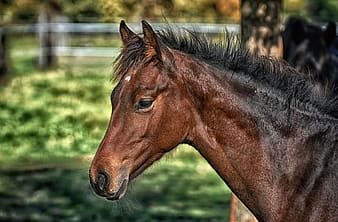 foal, horse, small horse, brown, cute, portrait, animal, animal wildlife, animal themes, mammal