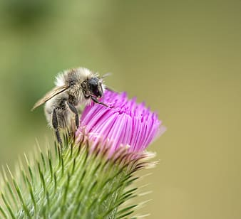 Closeup photo of honey bee on pink petaled flower