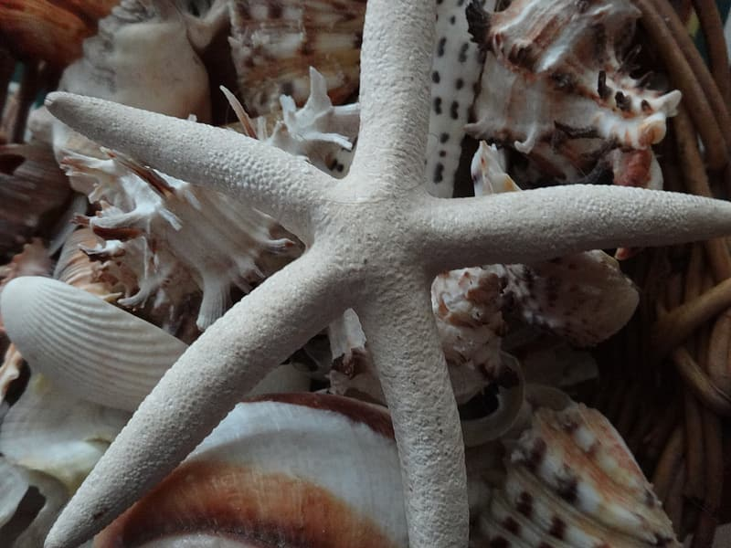White starfish on brown and white coral reef