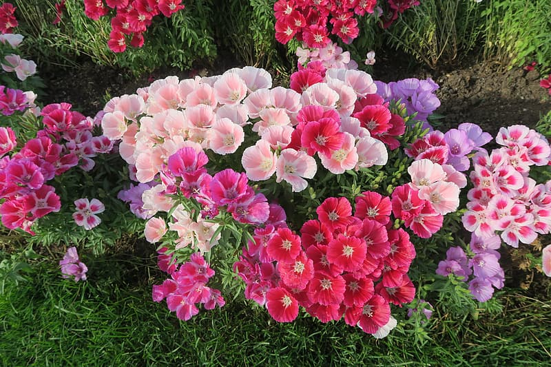 Pink, purple, and white flowers
