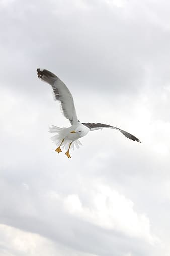 White and black seagull bird flying mid air during daytime