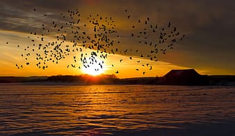 Silhouette of birds flying over the sea during sunset
