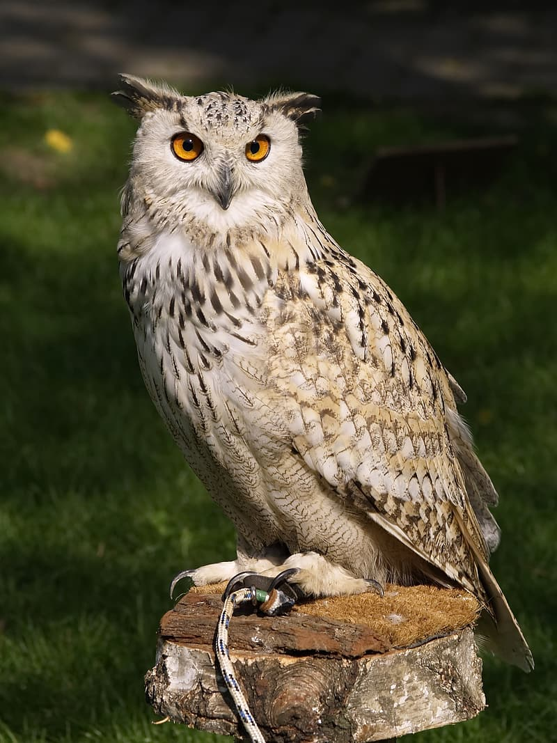 Photo of Owl during daytime