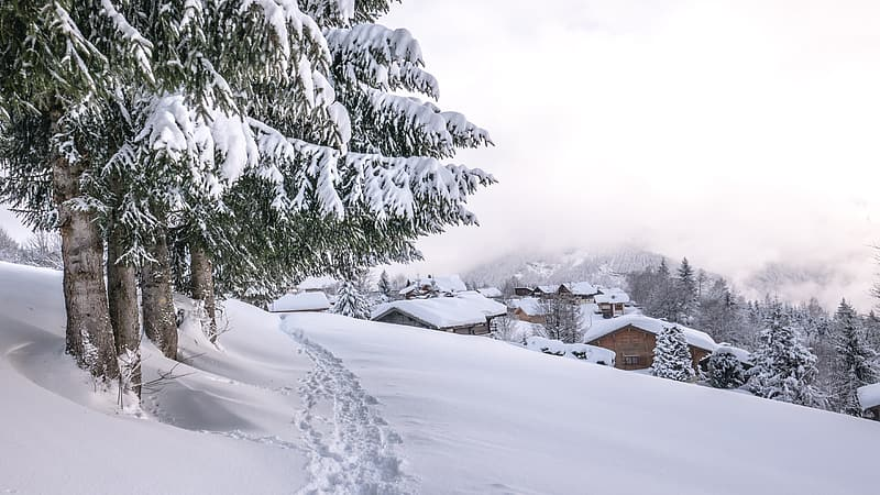 Green pine tree covered with snow during daytime