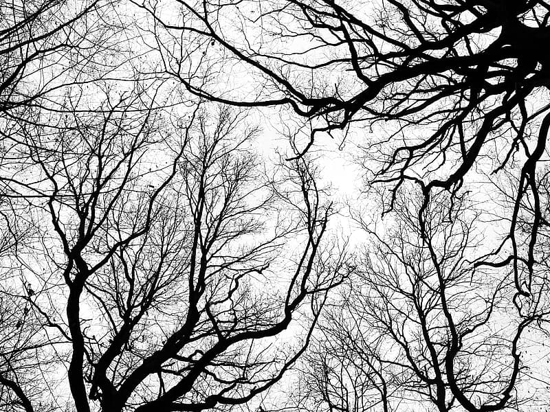Silhouette of hollow trees