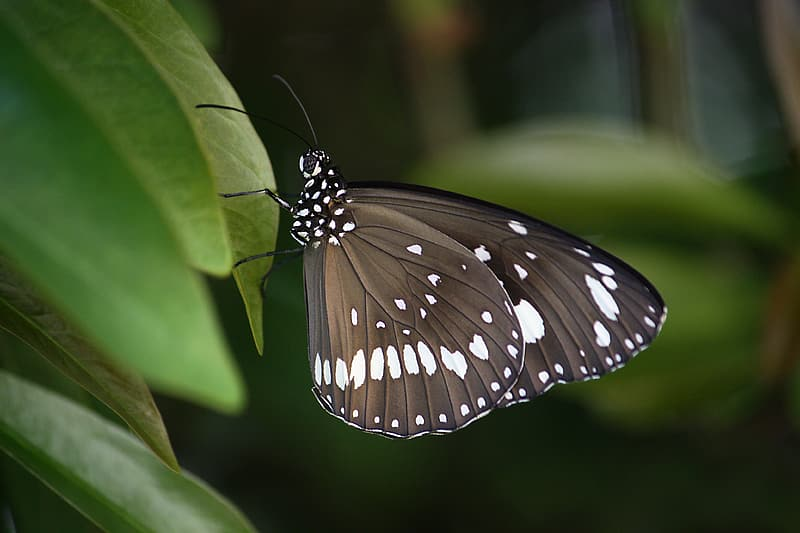 Black, white, and brown butterfly perch on green leaf tree