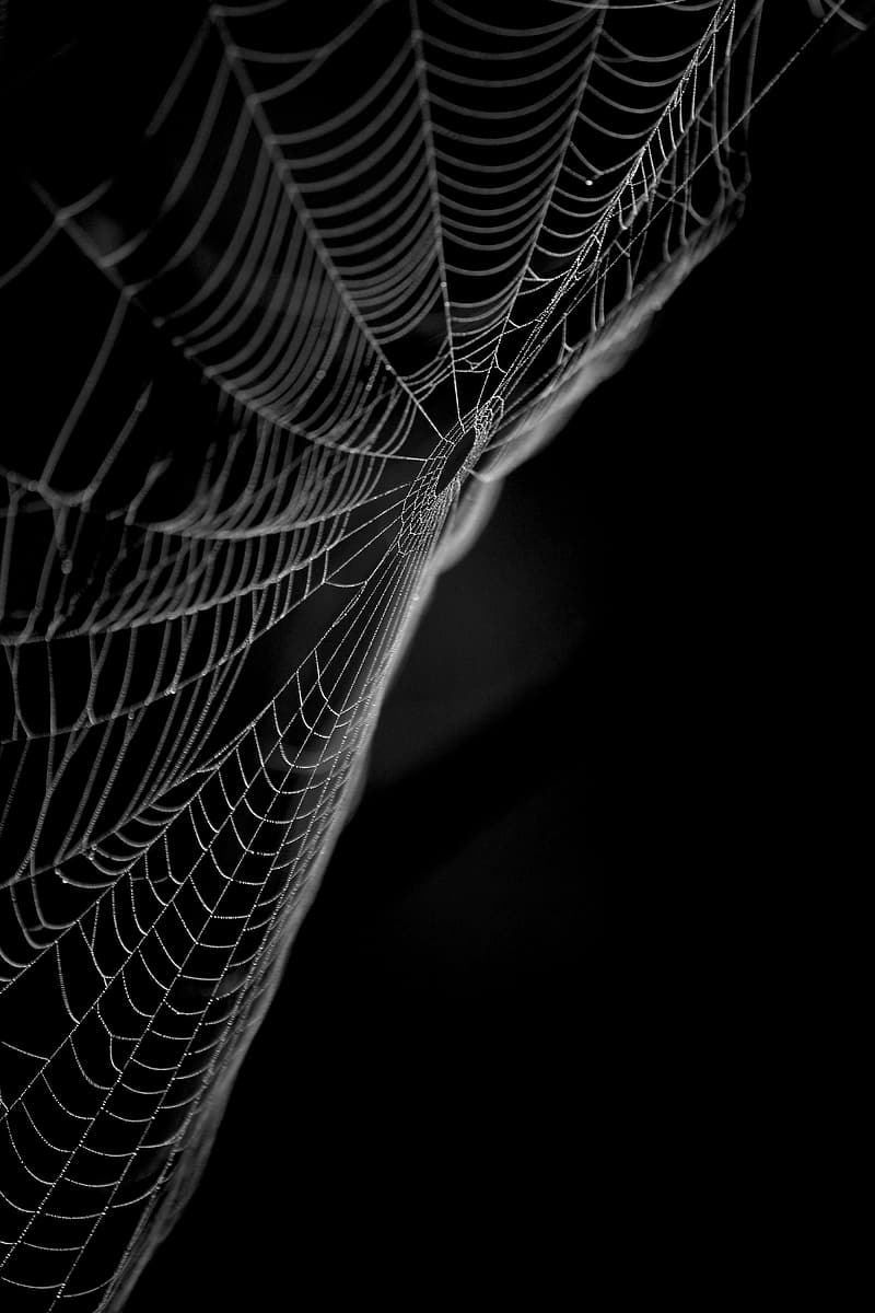 Spider web in grayscale photography