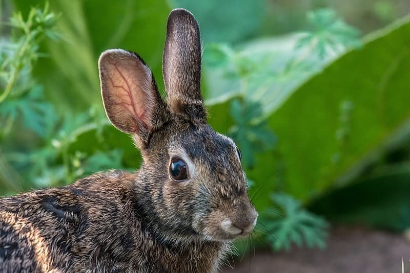 Selective focus photography of black and brown rabbit