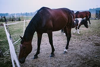 Brown and white horse on brown soil during daytime