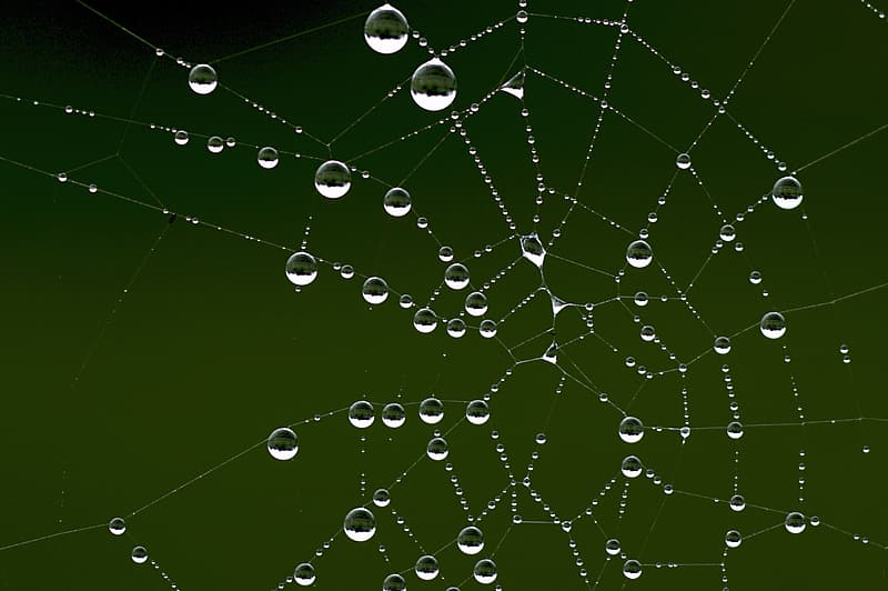 Spider web with rain droplets