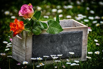 Red and white flowers on gray concrete box