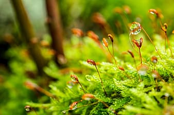 Shallow focus photography of water droplets in brown plants