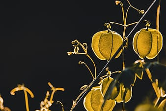 Yellow leaves with black background