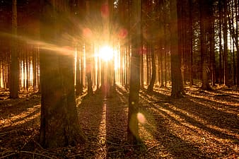 Forest on fall season with sunlight view