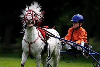 Boy in orange long-sleeved shirt and blue helmet riding horse carriage