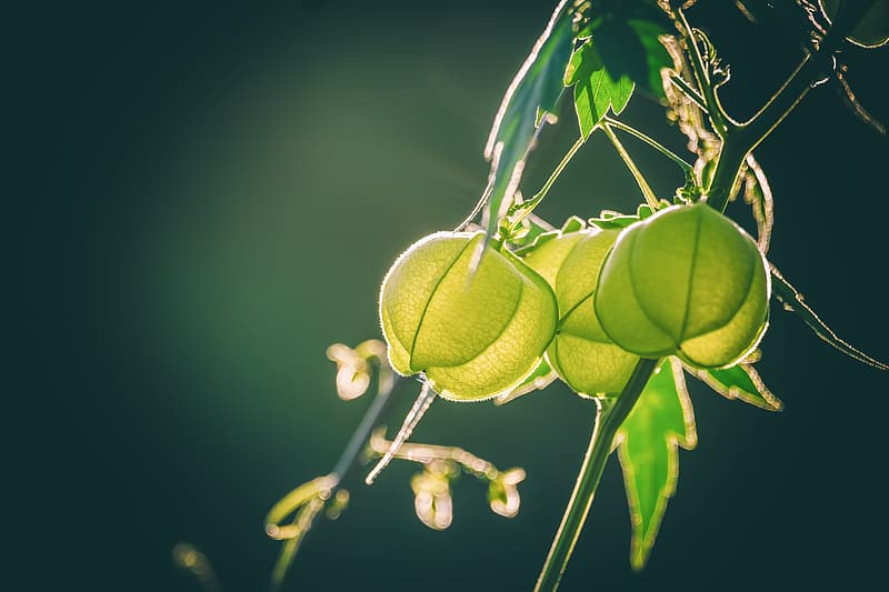 Green fruit with water droplets