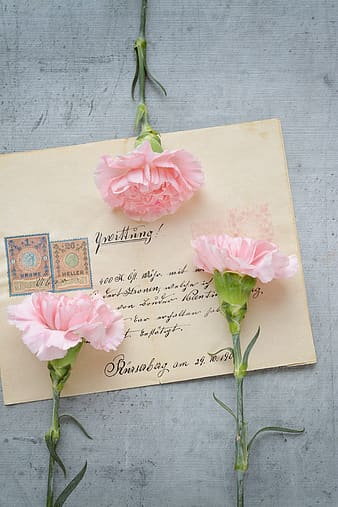 Mail envelope with three pink carnation flowers