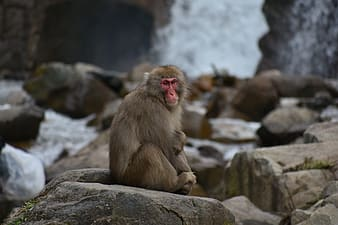 Brown monkey sitting on rock during daytime