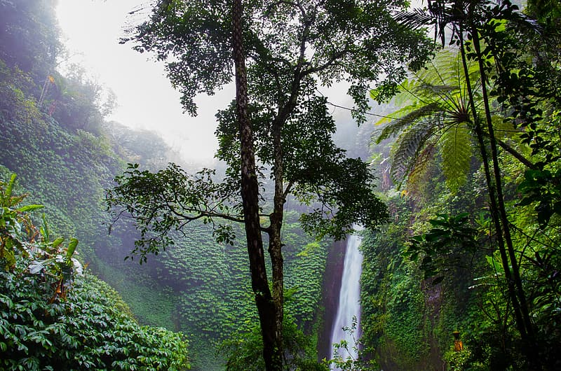 Waterfalls and forest photo