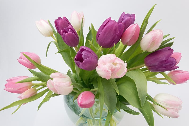 Closeup photography of pink and white tulips