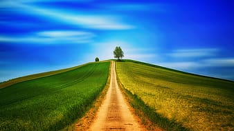 Road in between green field under blue sky