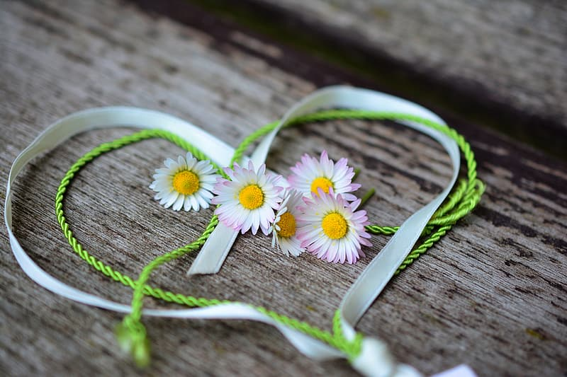 Five white petaled flowers between heart ribbon