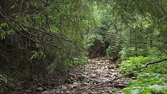 Forest with rocky path
