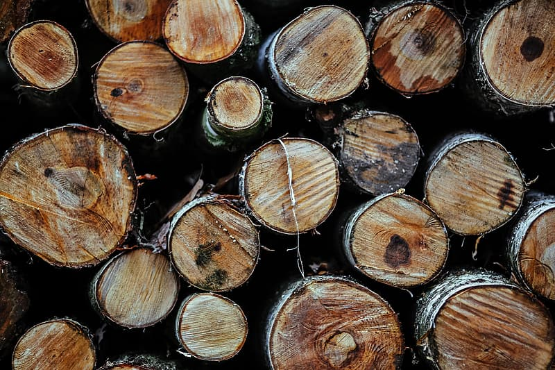Brown and green wooden logs
