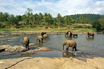 Group of elephants on brown sand during daytime