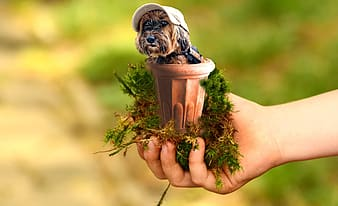 Person holding brown plant pot