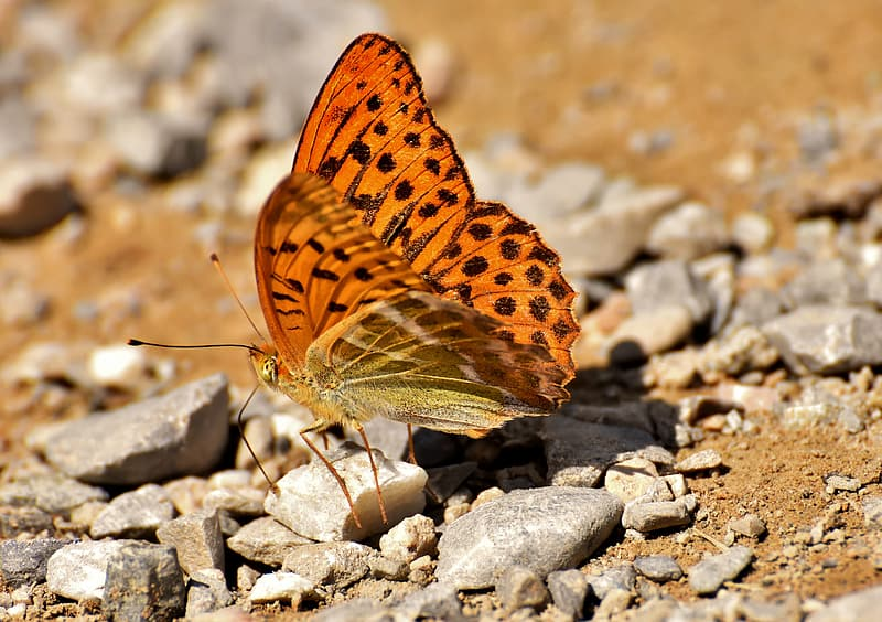 Brown butterfly on gray rocks during daytime