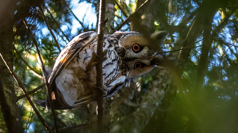 Brown and beige owl on tree brunch