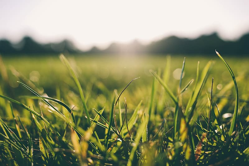 Micro photography of green grass field