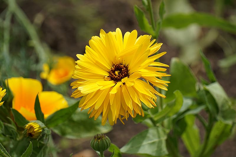 Closeup photography of yellow petaled flowers