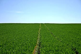 Green grass field with trail