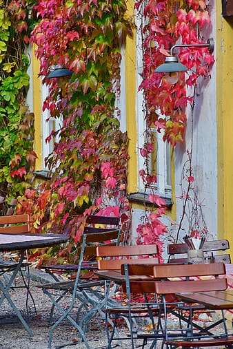 Two dining sets near red leaf vines at daytime