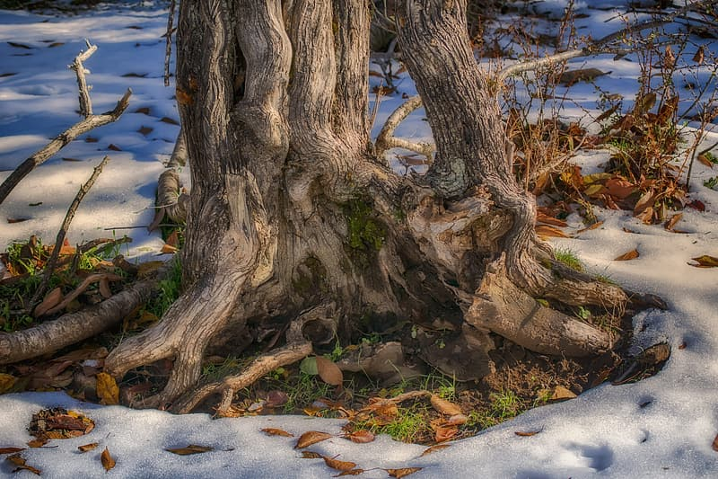 Brown tree trunk on snow covered ground